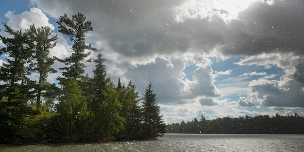 Trees at the lakeside with flakes of snow falling, lake of the woods, ontario, canada Premium Photo