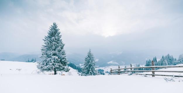 Trees in the mountains. winter mountains Premium Photo