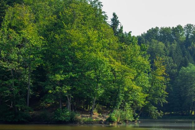 クロアチアのトラコスカンの近くの森の湖の近くの木 無料写真