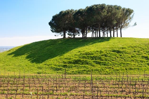 緑の草とプランテーションのある丘の上の木々 Premium写真
