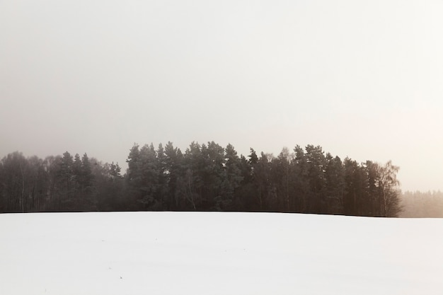 Trees photographed during the winter after a snow storm, the ground is covered with snow, farm field and forest Premium Photo