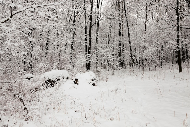 The trees photographed in a winter season. Premium Photo