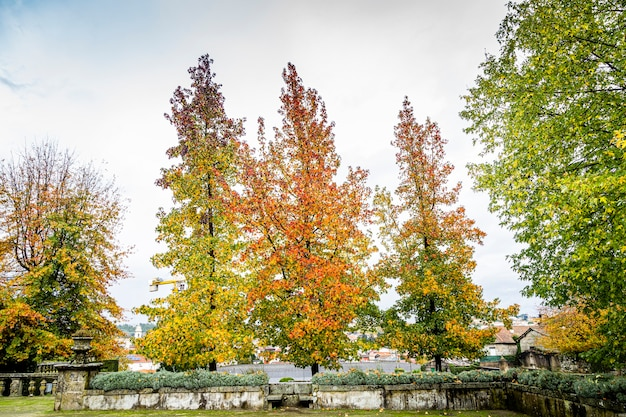 Trees with autumn season colors in the city of braga, portugal. Premium Photo