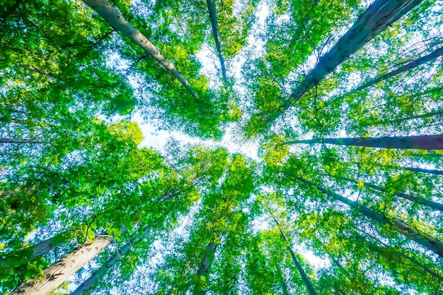 Trees with green leaves Free Photo
