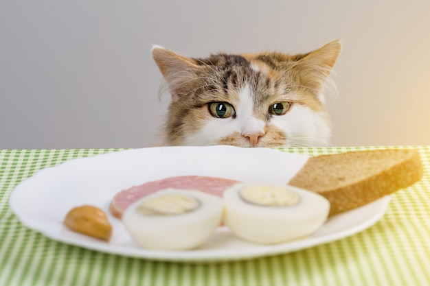 Tricolor cat steals sausage from the table Premium Photo