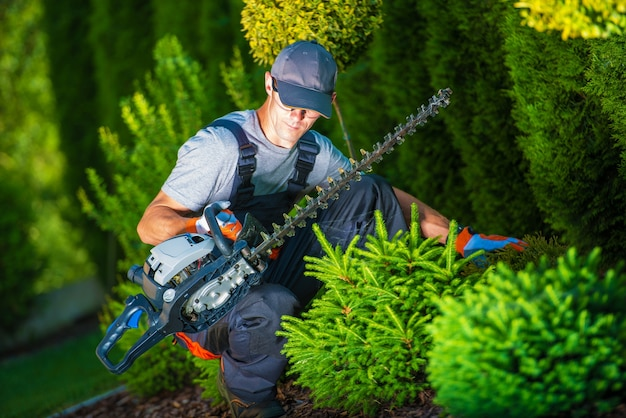 Trimming work in a garden Free Photo