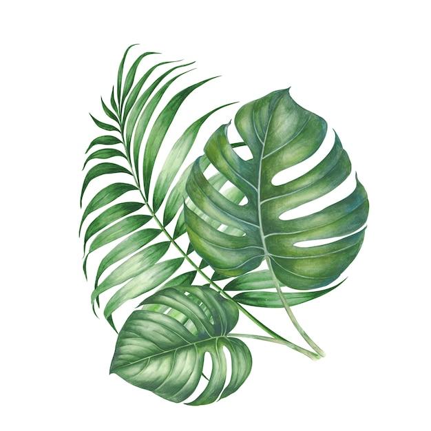 Tropic palm leaves composition. Premium Photo