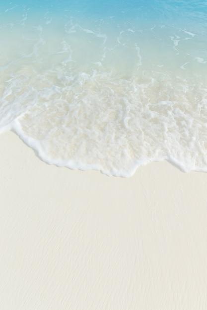 몇 야자수와 푸른 라군이있는 몰디브의 열대 해변 프리미엄 사진