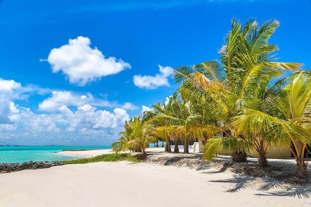 Тропический пляж на острове мальдивы Premium Фотографии