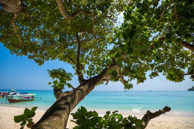 Tropical beach, krabi, thailand Free Photo