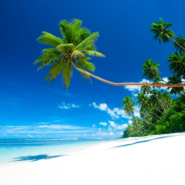 Samoa Beaches: Tropical Beach On Samoa Photo