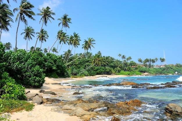 Тропический пляж с пальмами на шри-ланке Бесплатные Фотографии