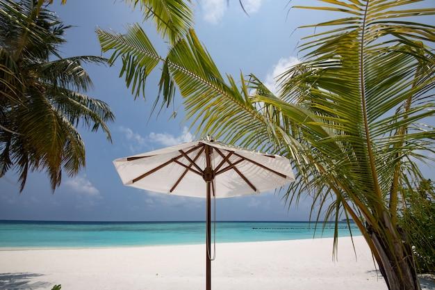 Tropical beach with umbrellas and palm tree Premium Photo