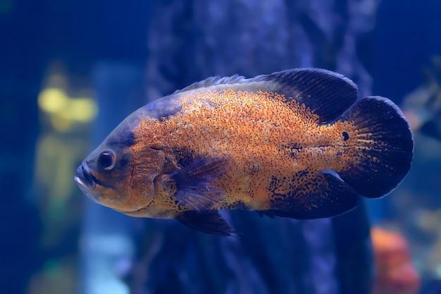 Tropical big fish Premium Photo