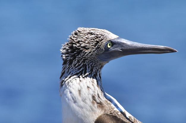 Tropical bird in natural environment Premium Photo