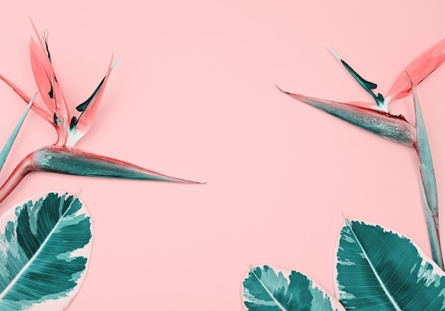 Tropical composition with bird of paradise and leaves on pink Premium Photo