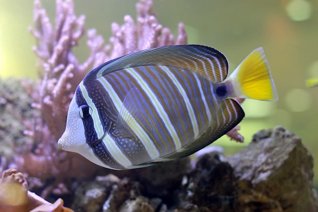Tropical fish in a coral reef Premium Photo
