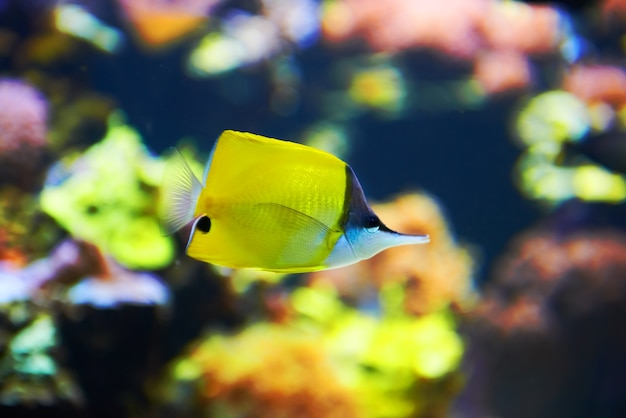 Tropical fish near coral reef with blue ocean water Premium Photo