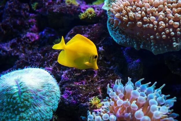 Tropical fish swims near coral reef Premium Photo