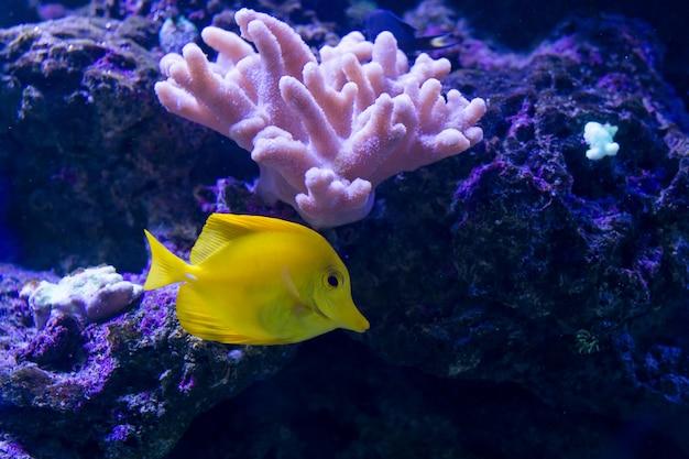 Tropical fishes swim near coral reef. Premium Photo