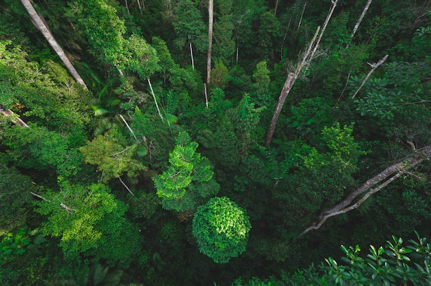 Tropical forest, natural scene with canopy tree in the wild Premium Photo