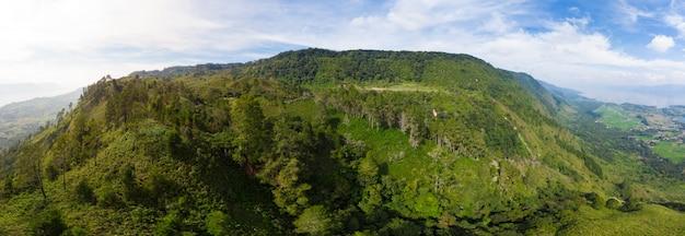 Tropical forest Premium Photo