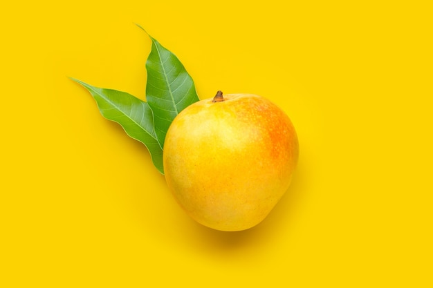 Tropical fruit, mango on yellow table. top view Premium Photo