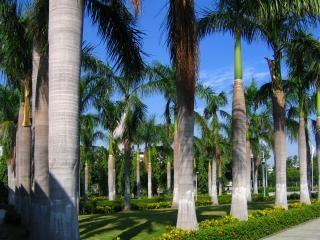 Tropical garden Free Photo