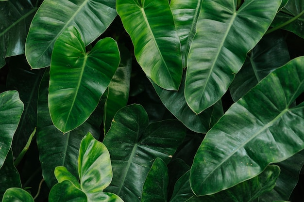 Free Photo Tropical Green Leaves Background Select from premium tropical green leaf images of the highest quality. https www freepik com free photo tropical green leaves background 4246365 htm
