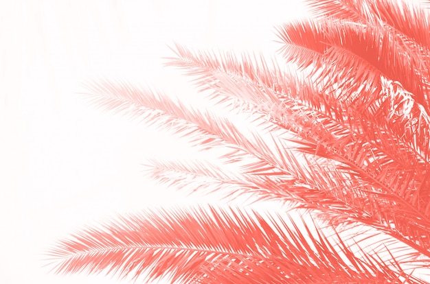 Tropical green palm leaves and branches on coral color. sunny day, summer concept. sun over palm trees. travel, holiday background. Premium Photo