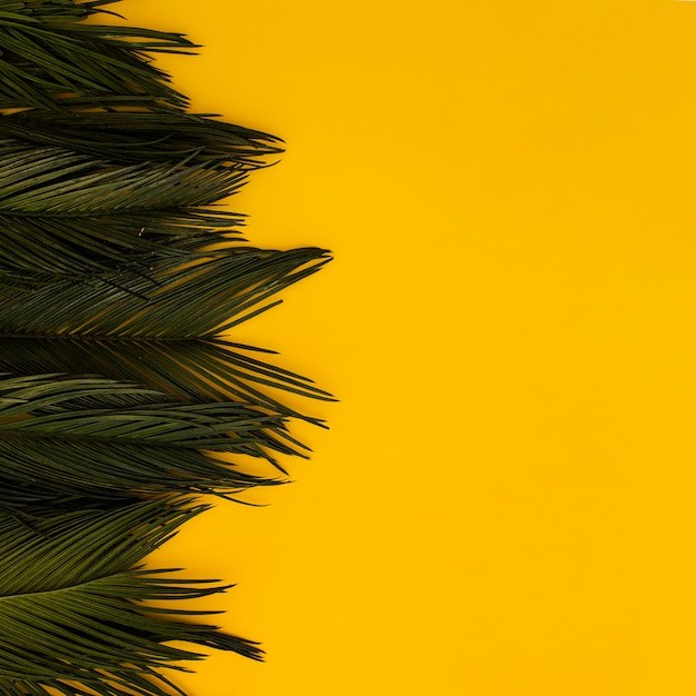 Tropical green palm leaves on yellow copy space background. Free Photo