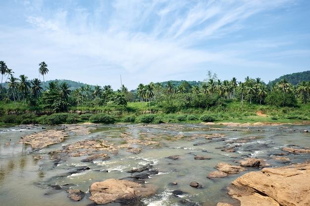 晴れた日にピンナワラの熱帯のジャングル川 Premium写真