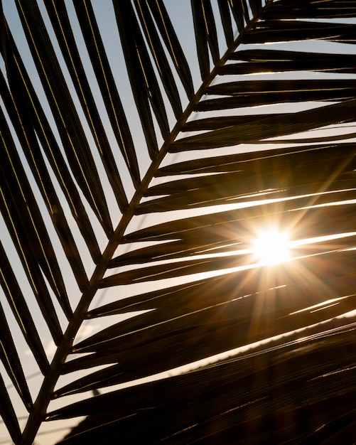 Foglia tropicale con raggi di sole Foto Gratuite