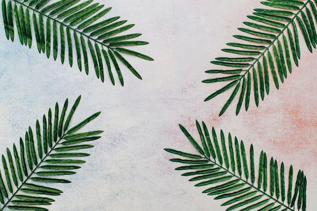 Tropical leaves on an abstract background. Free Photo