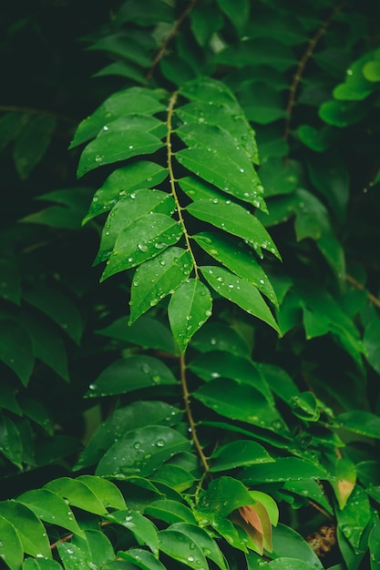 Tropical leaves,drops of rain on the leaves Premium Photo