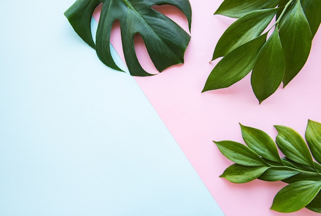 Tropical leaves and monstera leaf Premium Photo