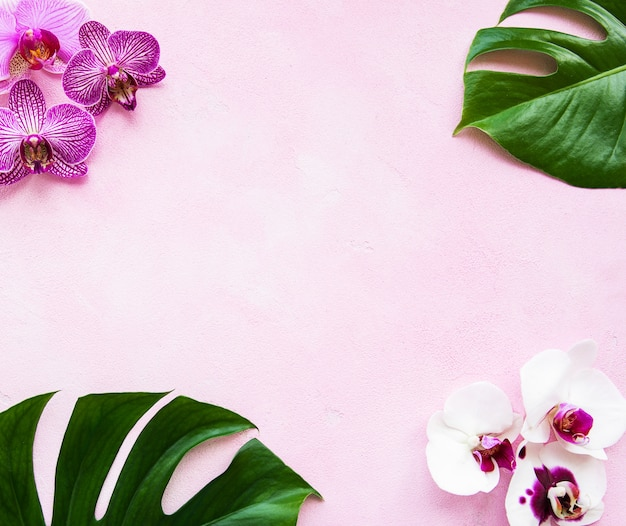 Tropical leaves monstera and orchid flowers Premium Photo
