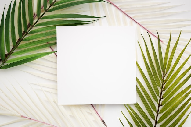 Tropical leaves Free Photo