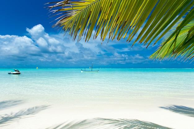 Tropical maldives island with white sandy beach and sea Premium Photo