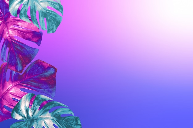 Tropical monstera leaves colored in trendy neon colors on fashionable neon pink blue gradient background. Premium Photo