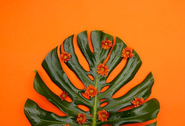 Tropical orange background Free Photo