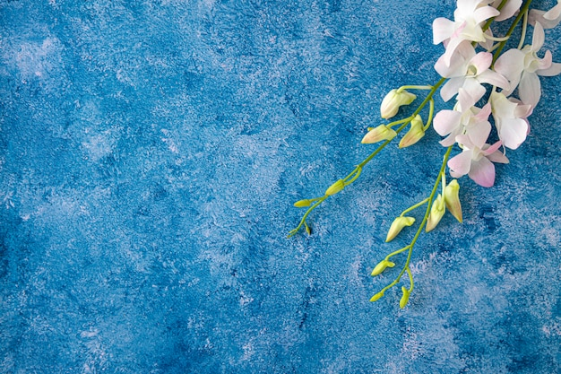 Tropical orchid on blue and white background Premium Photo