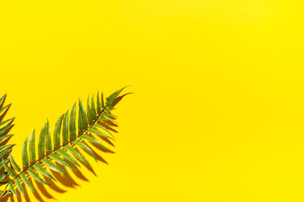Tropical palm branches on colorful surface Free Photo