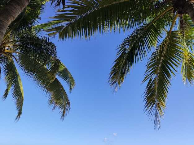 Tropical palm branches on the sea with sky with light and glare filter sunny Premium Photo