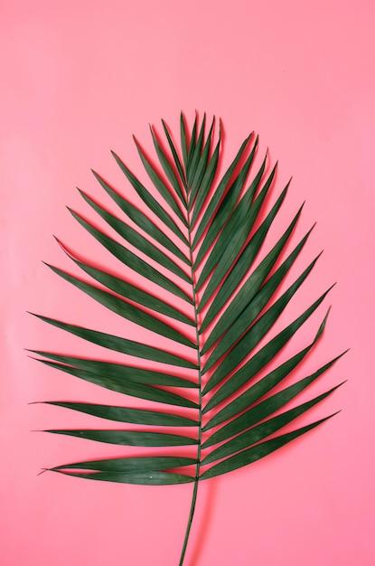Tropical palm leaf on pastel pink background Premium Photo