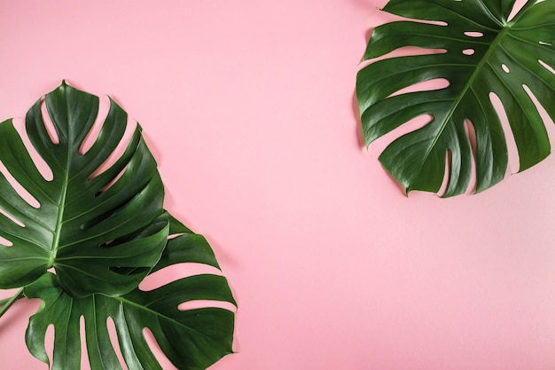 Tropical palm leaves on abstract pastel pink background Premium Photo