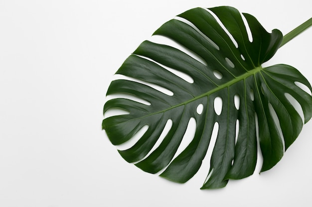 Tropical palm leaves. flat lay, top view Premium Photo