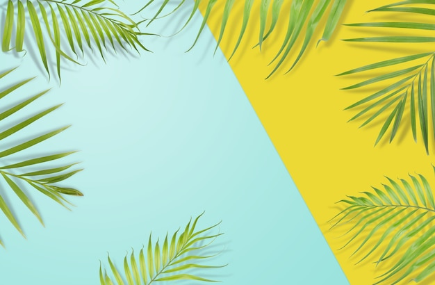 tropical palm leaves on yellow and light blue background