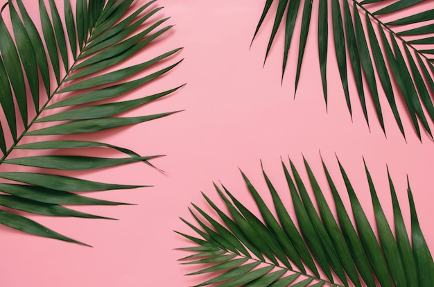 Tropical palm leaves on pastel pink background Premium Photo