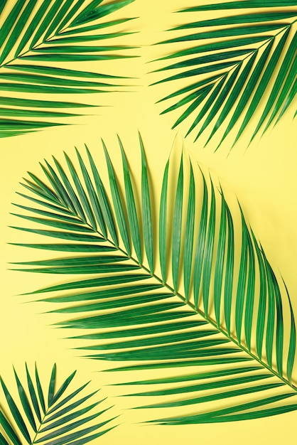 Tropical palm leaves on pastel yellow background. minimal summer concept. creative flat lay with copy space. top view green leaf on punchy pastel paper Premium Photo